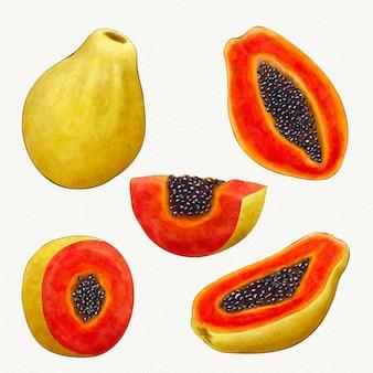 Verschiedene winkel der papaya-frucht