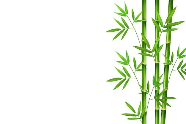 Vertikale stängel aus grünem realistischem bambus mit ästen und blättern.