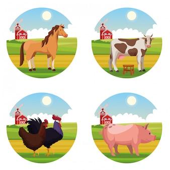 Vieh-cartoons