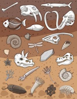 Viele fossilien unter der erde