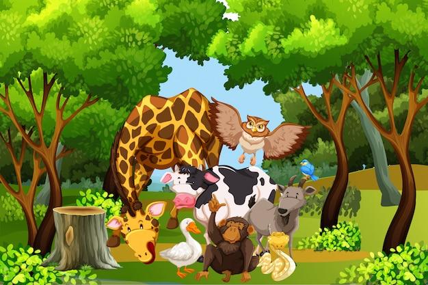 Viele tiere im wald