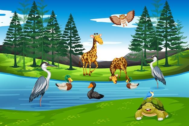Viele tiere in der natur
