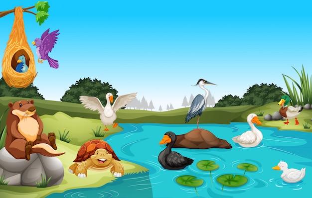 Viele tiere leben am teich