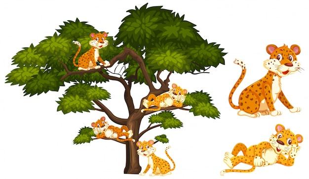 Viele tiger, die auf den niederlassungen sich entspannen