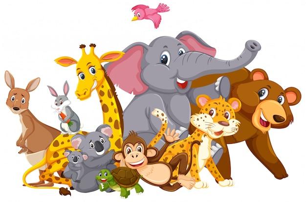 Viele wilde tiere