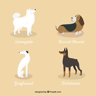 Vielzahl von hunderassen