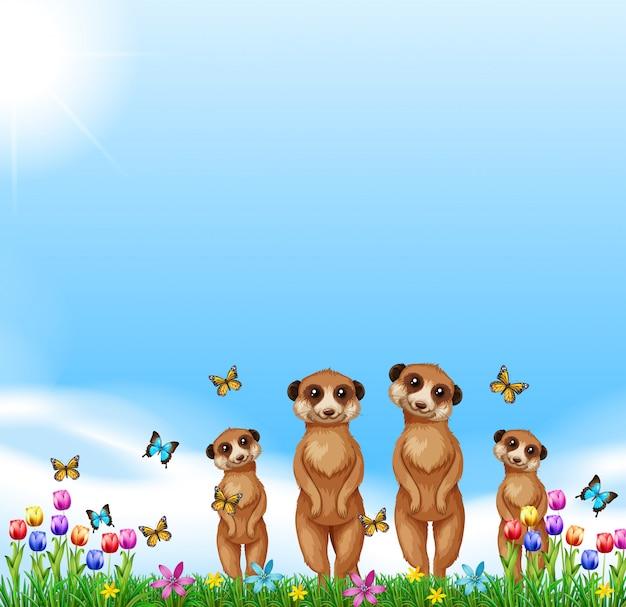 Vier erdmännchen stehen auf dem feld