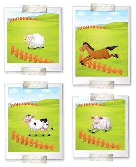 Vier fotos von tieren