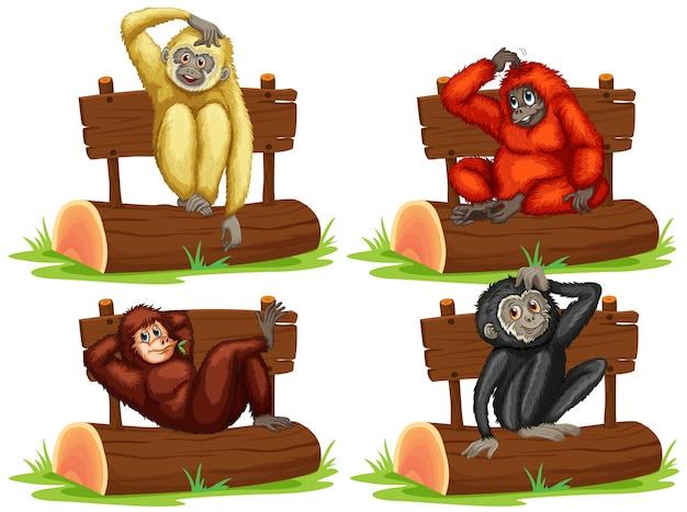 Vier gibbons sitzen am zeichen illustration