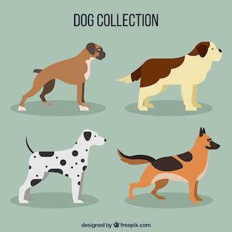 Vier profil hunde in flachem design