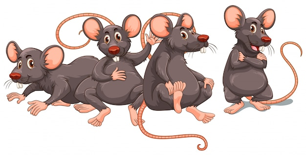 Vier ratten mit grauem fell