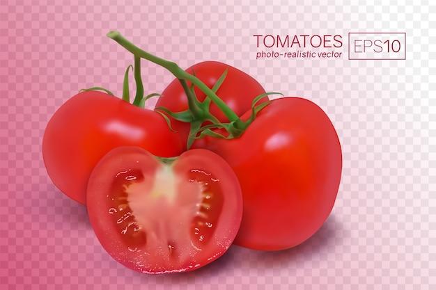 Vier reife rote tomaten auf einem zweig