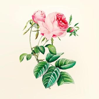 Vintage Blumenillustration