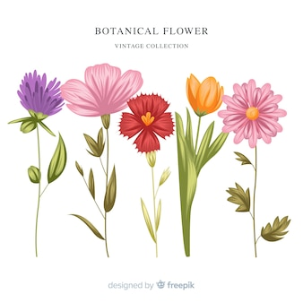 Vintage botanische blumensammlung