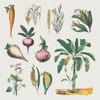 Vintage botanisches vektor-kunstdruck-set, remix aus kunstwerken von marcius willson und na calkins