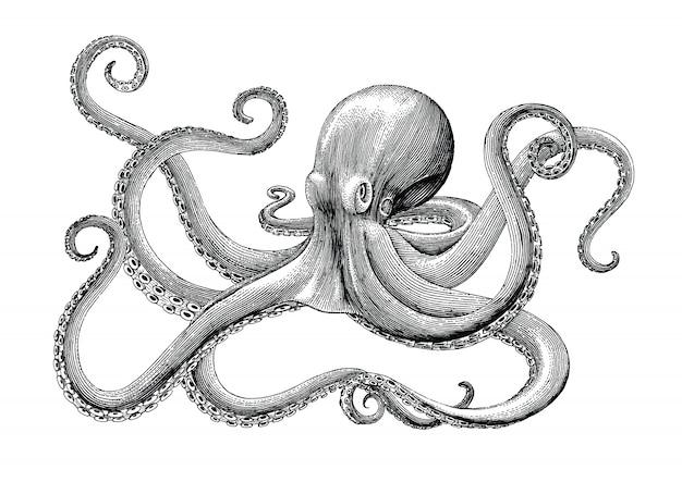 Vintage gravurillustration der krakenhandzeichnung auf weißem hintergrund