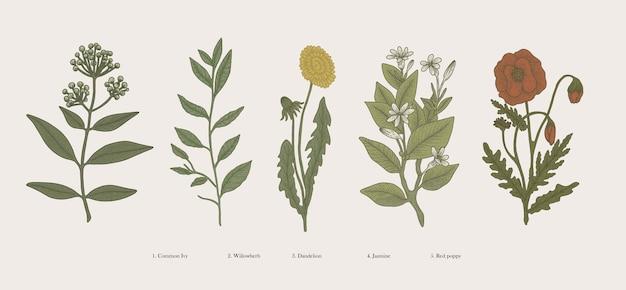 Vintage handgezeichnete botanische illustration wissenschaftliche pflanzen blumen und natürliche kräuter isoliert