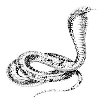 Vintage illustrationen der ägyptischen kobra