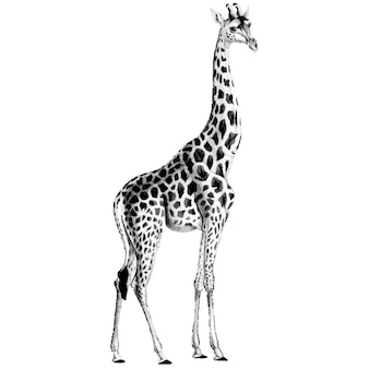 Vintage illustrationen der giraffe