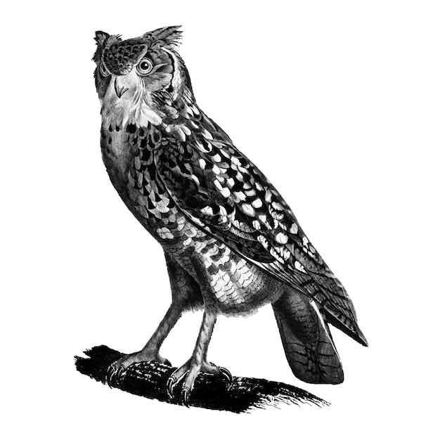 Vintage illustrationen des ägyptischen ascalaphus