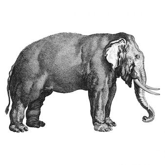 Vintage illustrationen des elefanten