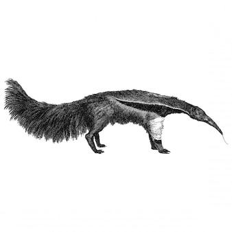 Vintage illustrationen des großen ameisenfressers