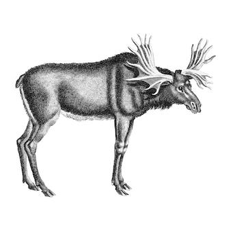 Vintage illustrationen von elch