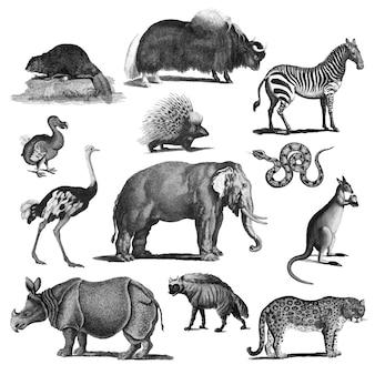 Vintage illustrationen von tieren