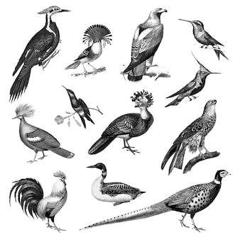 Vintage illustrationen von vögeln