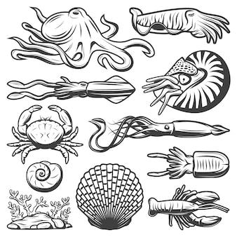 Vintage meereslebewesen-sammlung mit tintenfisch-garnelen-tintenfisch-tintenfischkrabbenhummer-seetang-garnelen-muscheln isoliert
