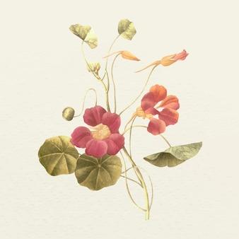 Vintage mönchskresse-blumen-vektorillustration, remixed aus gemeinfreien kunstwerken
