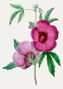 Vintage mr.lindleys hibiskus zur dekoration