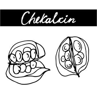 Vintage nahtlose muster mit schmetterlingen im doodle-stil dekoration handgezeichnete schmetterlinge