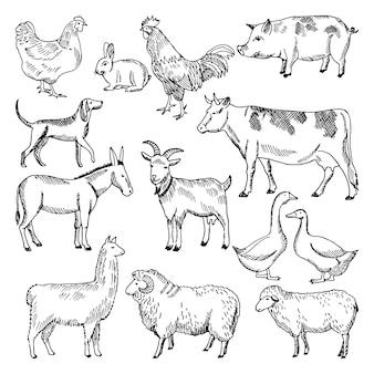Vintage nutztiere. landwirtschaft gezeichnete art der illustration in der hand. tierhaltung skizze zeichnung chicke