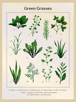 Vintage-poster mit realistischen grünen wiesengräsern und ihren namen in der unteren abbildung