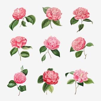 Vintage-set aus rosa kamelienblüten