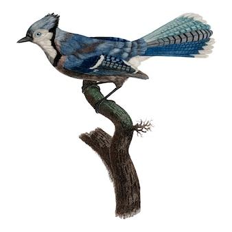Vintage vogel abbildung