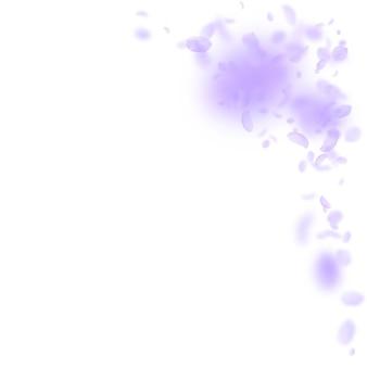 Violette blütenblätter fallen herunter. feine romantische blumenecke. fliegendes blütenblatt auf weißem quadratischem hintergrund. liebe, romantik-konzept. ansprechende hochzeitseinladung.