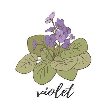 Violette blume auf weißem hintergrund