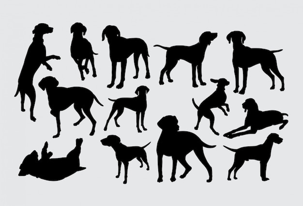 Vizsla hund haustier tier silhouette