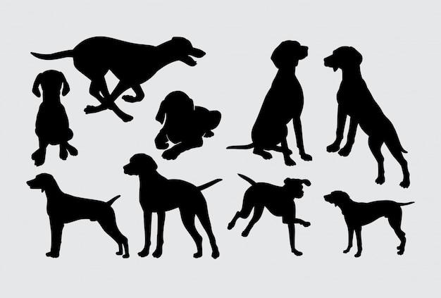 Vizsla hund tier aktion silhouette