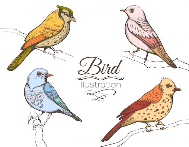 Vögel illustration sammlung