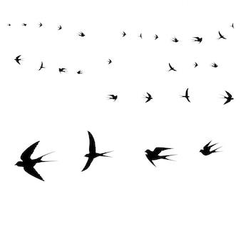 Vögel-symbole