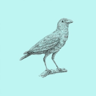 Vogel artwork illustration