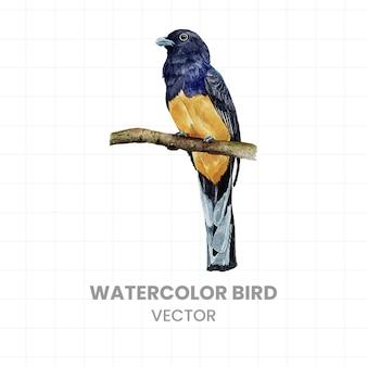 Vogel in aquarell gemalt