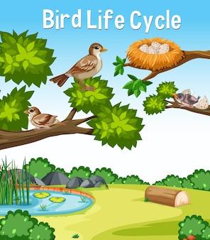 Vogel-lebenszyklus-schriftart in der naturszene im freien