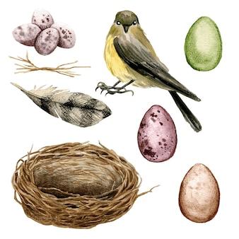 Vogel mit einem nest und eiern illustrationsdesign
