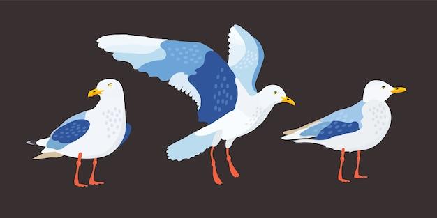 Vogel. möwenset illustration.