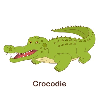 Vokabel-flash-karte für kinder. krokodil mit bild von krokodil (vokabular für ger : a1-a2-niveau)