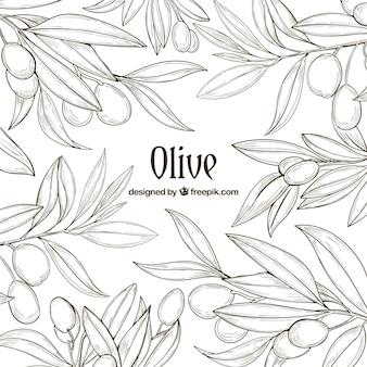 Von hand gezeichnet hintergrund der olivenzweige